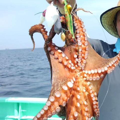 東京湾でのタコ釣り!2kgの大物タコをタコ釣りボールでゲット🐙